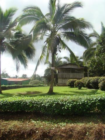 Guatuso Alajuela  Costa Rica